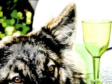 The Curious Case of the Dog and the Wine Glass