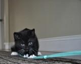A Little Kitten