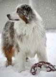 Watching Snowflakes Fall