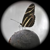 Giant Butterfly Discovered Sitting on Top of the World