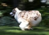 Run Della Run