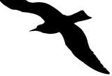 Corner to Corner Seagull