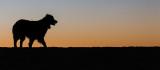 Sunset Watcher