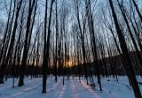 Berkshire Winter Sunset