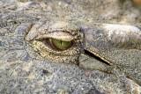 Kalimba Reptile Park, Zambia