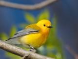 Ohio Birds 2014
