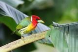 Costa Rica Birds 2015