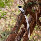 Western Ethiopia Backyard Birds 2015