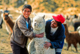 Alpaca Farmers with HPI Alpaca