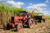 Sugarcane Harvesting, II