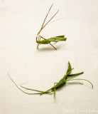 Grasshoppers Made from Palm Leaf