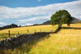 Tree at Dafydd Bryn Rhyg's farm