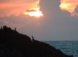 Cormorants just off Ynys Llanddwyn