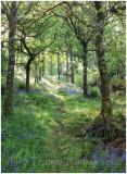 Path through the woods - Maentwrog