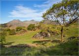 Moelwyn range from Llwyn Crai