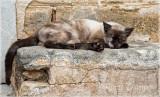 camo cat-small.jpg