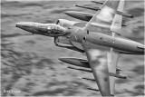 Harrier on Corris Corner