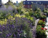 Dublin Castle Garden Plot