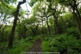 Padley Gorge Oak Woodland, Derbyshire UK