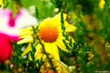 The Beauty of Springtime