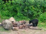J'ai aussi pu rencontrer un jeune ours noir...