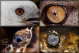 eyes originals