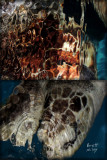 Turtle Crossing original
