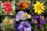 Chakra in Bloom original