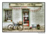 The Little Curio Shop