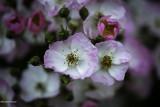 L'univers des roses 2014
