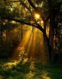 Dawn Sunbeams