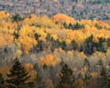 White Mountains Fall