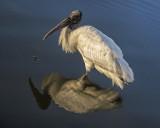 Double Stork