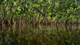 Mangrove Abstraction IV