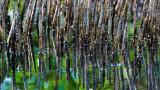 Mangrove Abstraction II