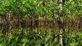 Mangrove Abstraction I
