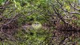 Woolverton Trail #5