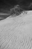 Dunes at Huguenot Memorial Park #1