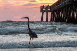 Heron and Pier