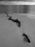 Little Tiger Island #29