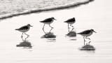 Four birds and the Surf