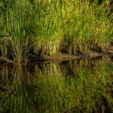 Grass Along Pottsburg Creek