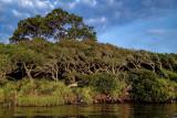 South End of Guana Lake II