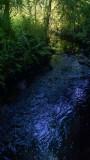 Jones Creek in the Shadows
