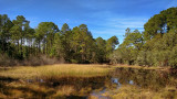 Jacksonville Arboretum and Gardens #1