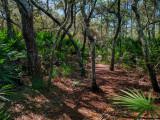 Jacksonville Arboretum and Gardens #2