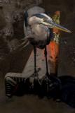 Heron, Parking Cone, and Mud