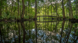 Trout Creek #2