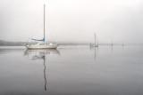 Fog on the Ortega River #11