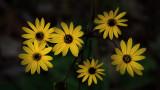 Six Yellow Flowers